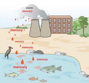 mercurio inquinamento